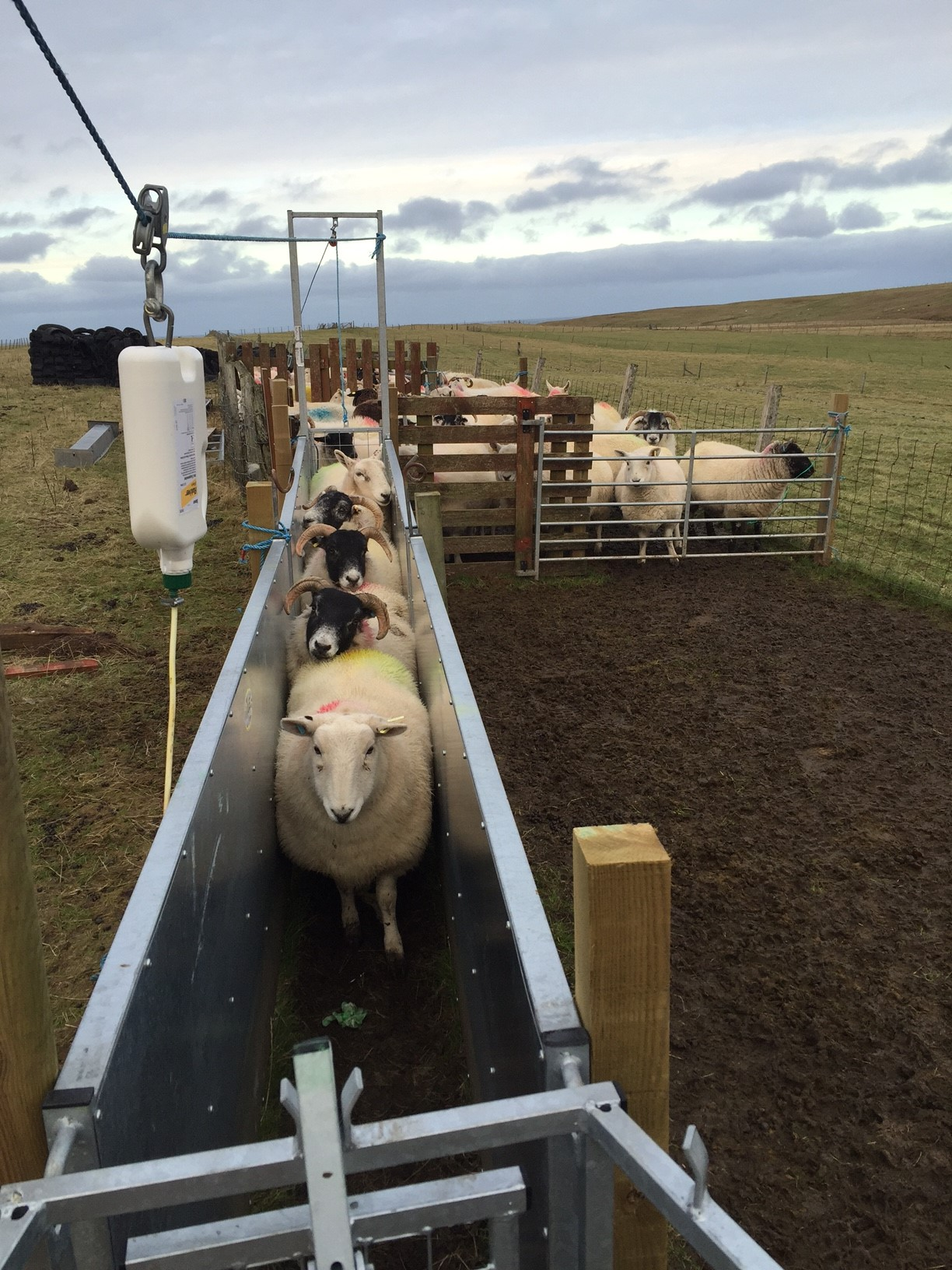 Boys lifted, girls out | Air An Lot | life on a croft in Ness